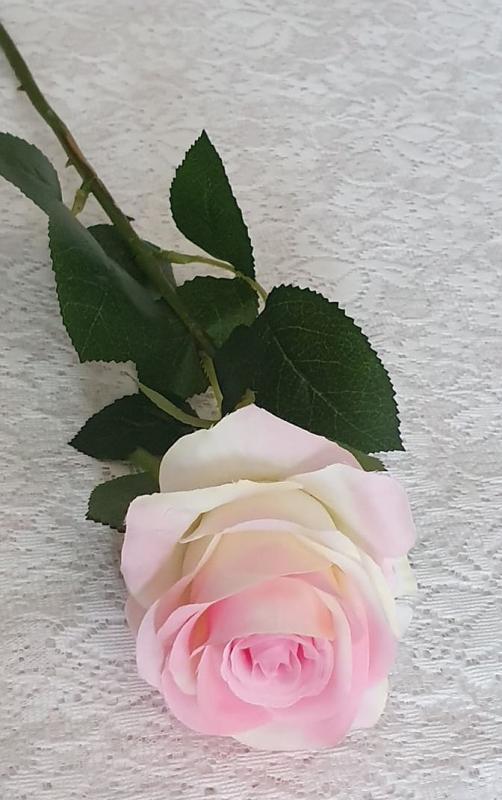 Ljusrosa Ros Med Gröna Blad