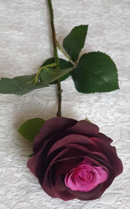Mörk Lila Rosa Ros
