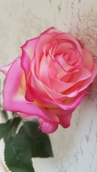 Mörk Rosa Cerise Ros