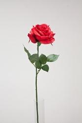 Röd Ros med blad