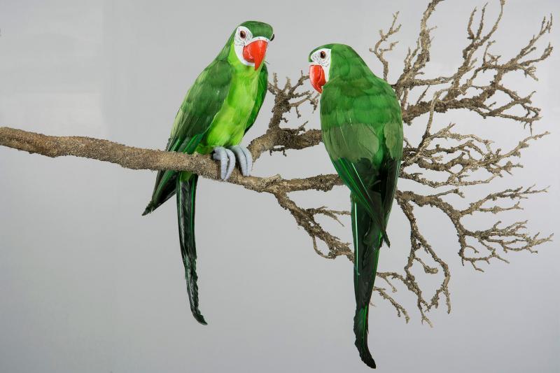 Papegoja Sittande Grön