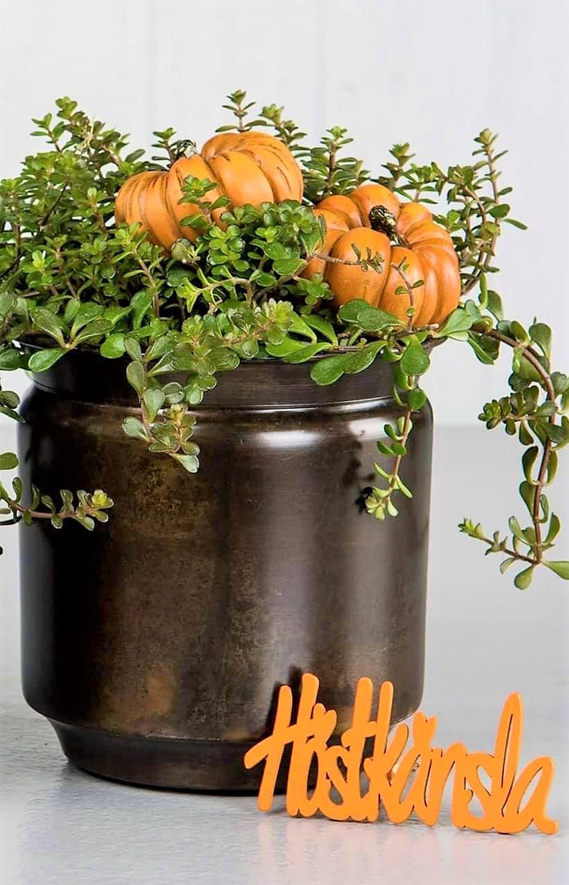 Pumpa Stick Orange 2-Pack