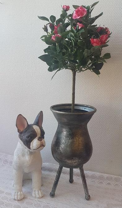 Rosa Ros På Stam