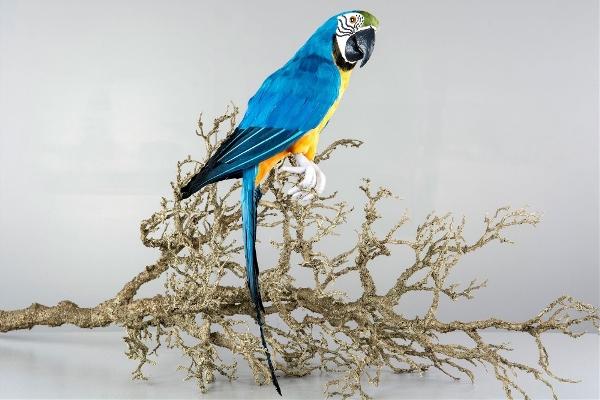 Sittande Papegoja
