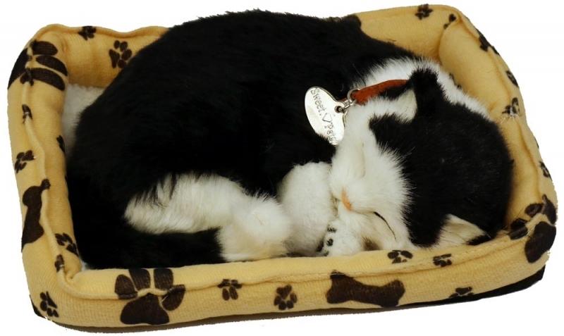 Sovande Katt I Bädd
