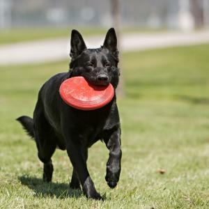 Hundleksak KONG Frisbee  Gummi  23cm