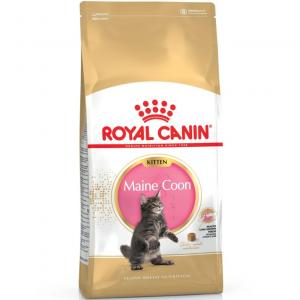RC Maine Coon Kitten 2kg
