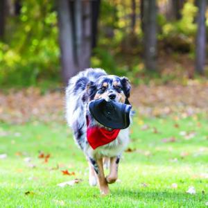 Hundleksak KONG Frisbee Extreme Flyer