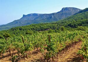 Blandad Vinlåda - Provence élite