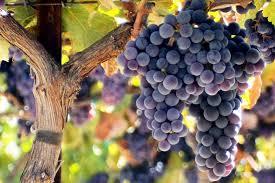 Blandad Vinlåda - One Grape Only (6 flaskor rött/vitt)