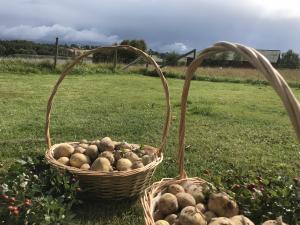 Ekologisk Potatis av sorten Twister 1 kg - Ruds Gård
