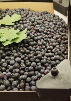 Blåbär på burk, handplockade - frysta 22 gr/0,40 L