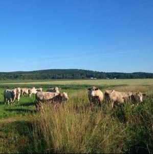 Nötköttslåda KRAV/Ekologiskt Sandbols Gård Nysäter - Boka och få info om nästa leveranstid 20 kg