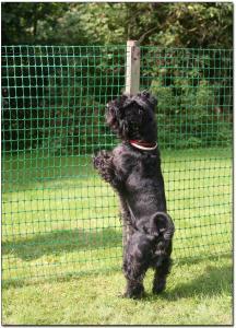 Hundstaket Höjd 2m (50m)