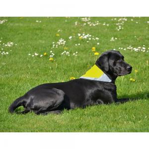 Reflexskrafs för hund *REA 50%*