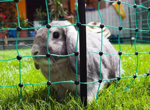 Kanin elnät Ovinet 65cm 50meter GRÖNT