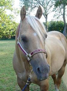 Grimma Stl Horse