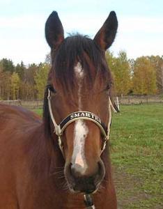 Grimma Stl Pony