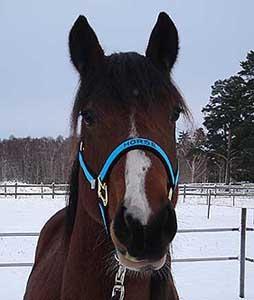 Grimma Stl Foal