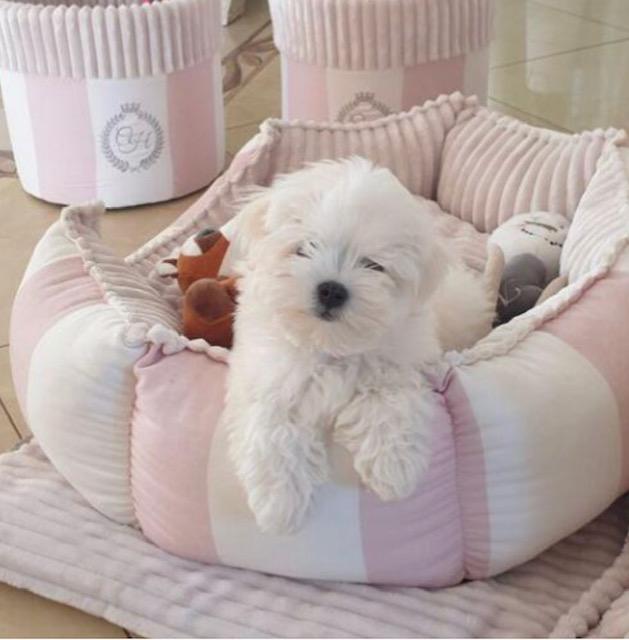 Bed Monte Carlo, rosa/vit