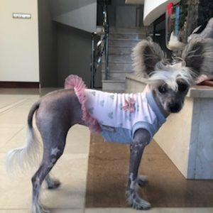 Rosa hundklänning med tyll