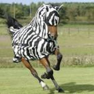 flugtäcke zebra bucas buzz off full neck helhals