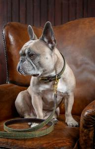 halsband fransk bulldog