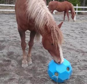 höboll hästleksak