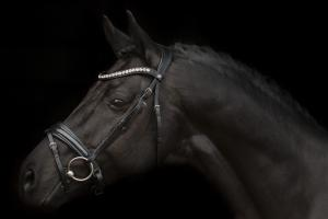 mystery bridle sd-design