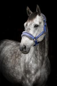 Horse Unique Grimma