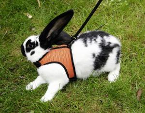 Sport Sele till kanin