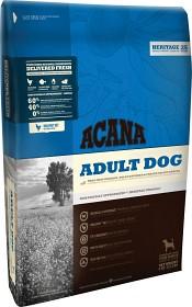 Dog Adult