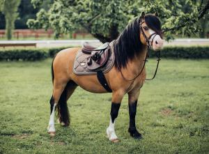 Hoppschabrak Champange Ponny