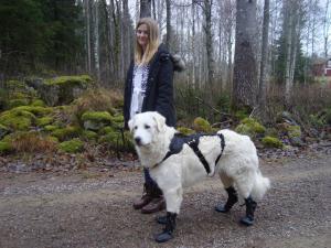 Hundskor. Skyddsskor för räddningshund mm