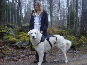 Hundsele. Kraftig typ för räddningshund