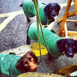 Sporting Saint Hundtäcke - torktäcke