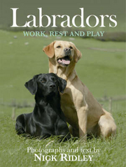 Labradors  - work, rest and play