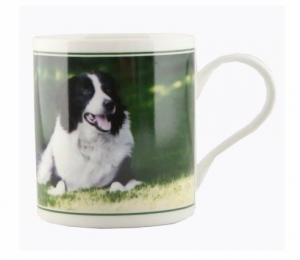 Mugg - liggande border collie