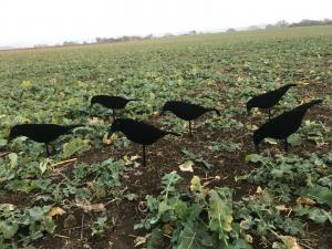 A1 Decoys flockade neoprenskal - svartfågel 6-pack