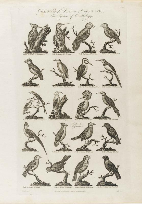 Cooke-Birds #002