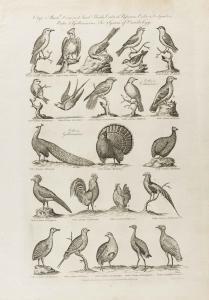 Cooke-Birds #003