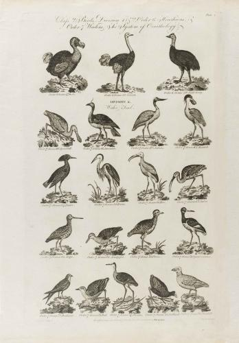 Cooke-Birds #004