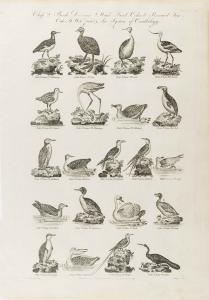 Cooke-Birds #005