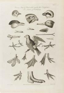 Cooke-Birds #006