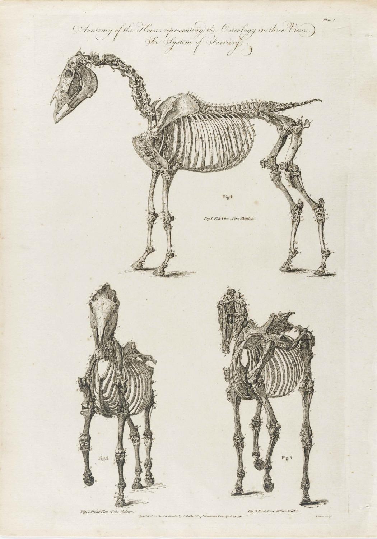 Cooke-Horse #001