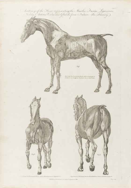 Cooke-Horse #002