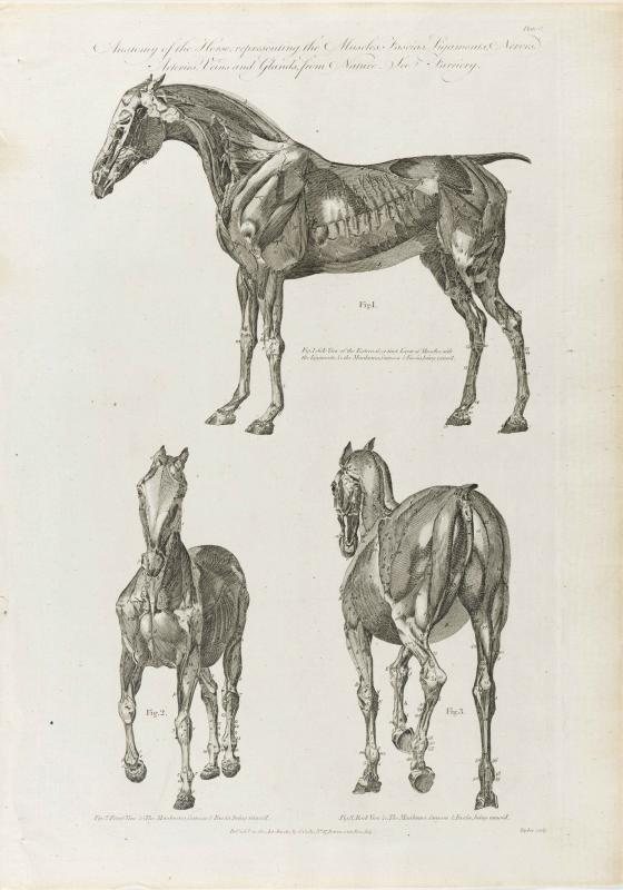 Cooke-Horse #003