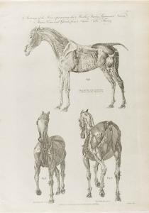 Cooke-Horse #004