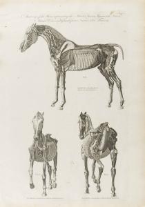 Cooke-Horse #005