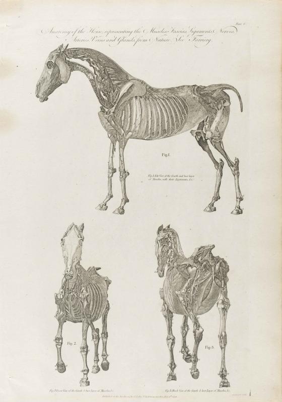 Cooke-Horse #006